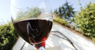0024_Wine_Wachau