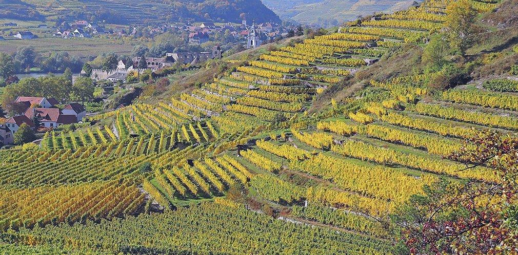 0044_Durnstein_Wineyards